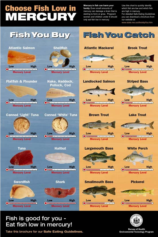 Zachariah isabel different types of objects for Healthiest types of fish