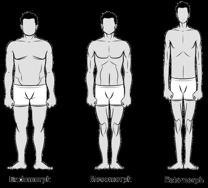 bodytypes-somatotype-fitness-exercise-appearance-healthhabits
