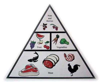 paleo-healthy-food-pyramid