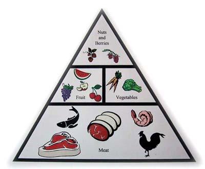 paleo-healthy-food-pyramid