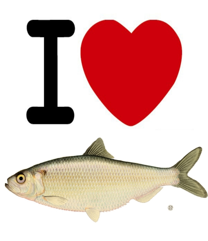 i-love-fish