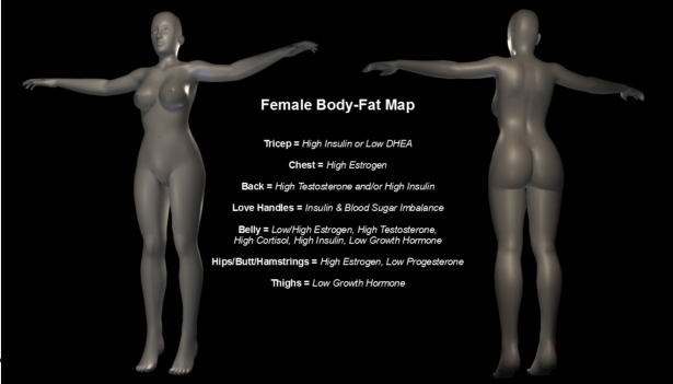 Body-Fat Map - Female woman
