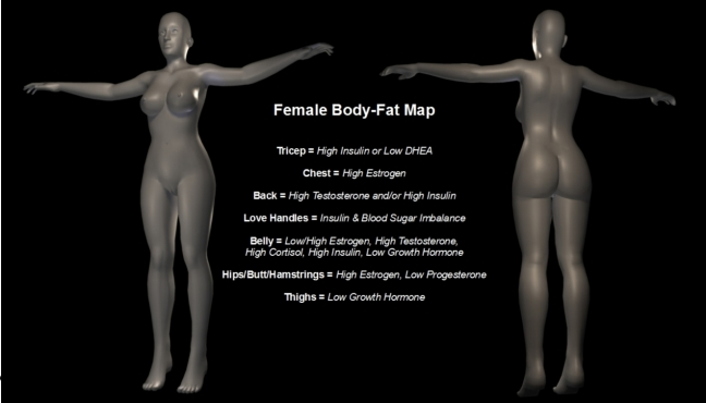 Body-Fat Map - Female woman