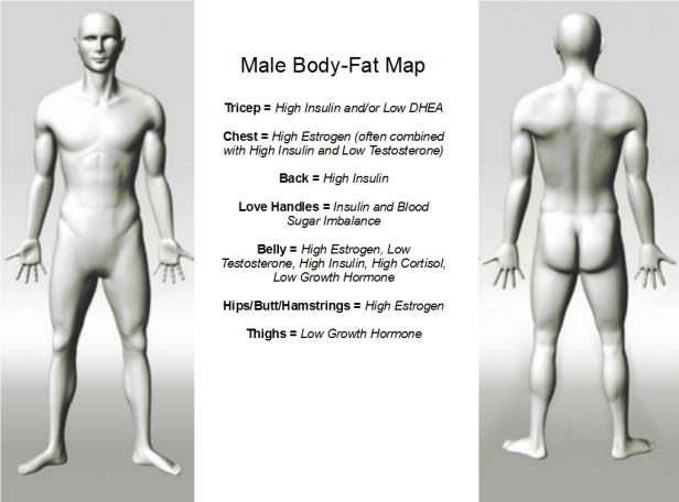 Body-Fat Map - Male