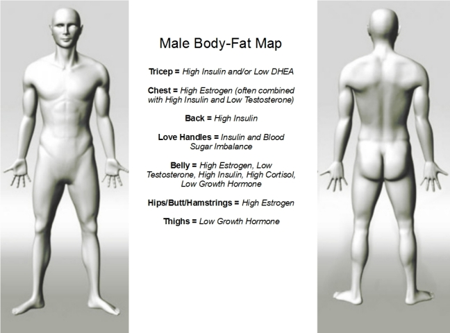 Body-Fat Map - Male