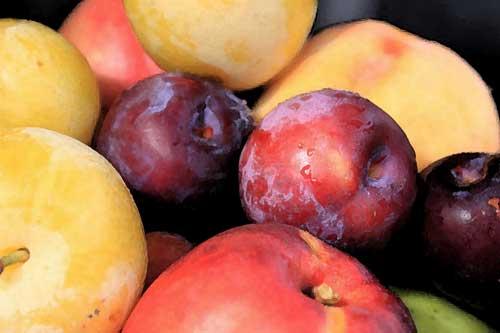 peaches-plums-nectarines