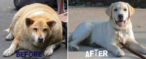 fat-dog-fit-dog