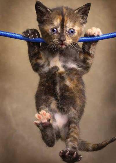 cat-pull-ups
