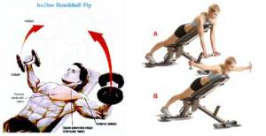 incline-fly-reverse-fly