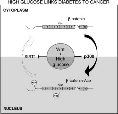 sugar-diabetes-cancer
