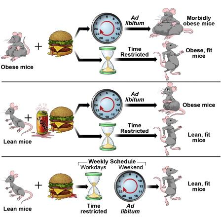 health diet obesity healthhabits